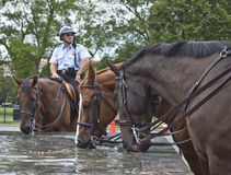 PoliceHorses Royalty Free Stock Photos
