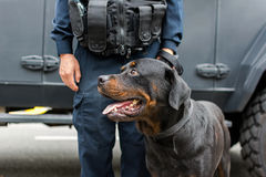 Policeman and  balck dog on duty Royalty Free Stock Image