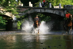 Policeman on horseback into the river with water spray. Policeman riding in the River Lambro with water spray in the Monza Park that goes galloping in water Stock Image