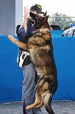 Policeman and police dog Stock Photos