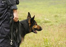 Policeman´s  champion dog Royalty Free Stock Image