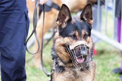 Free Policeman With A Police Dog Royalty Free Stock Photography - 135911027
