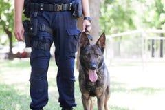 Free Policeman With Belgian Malinois Police Dog Royalty Free Stock Image - 171872566