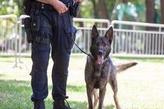 Free Policeman With Belgian Shepherd Police Dog Stock Photography - 171872922