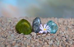 Polierachatstücke mit Lithops-Blume Stockfotografie