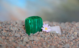 Poliermalachitstück mit Lithops-Blume Stockbilder