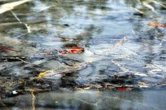 Polierte Oberfläche der Marmorplatte Lizenzfreie Stockfotografie