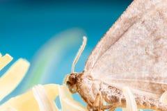 polilla Imagen de archivo libre de regalías