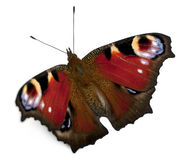 Polilla europea del pavo real, Inachis io Imagen de archivo libre de regalías