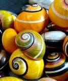 Polimitas. Polimita shells; these are the most beautiful ground mollusk over the wild world. It is an endemic species from the most eastern zone of Cuba and Stock Photo