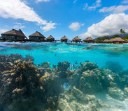 Polinésia francesa acima e água do fole Imagens de Stock