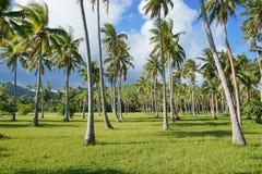 Polinesia francese della piantagione degli alberi del cocco Fotografia Stock Libera da Diritti