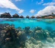 Polinesia francese qui sopra ed acqua di muggito Immagini Stock