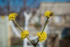 Polinización de árboles Imagenes de archivo