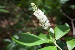 Polinización de la flor Fotografía de archivo