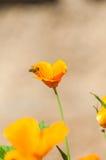 Polinización de las flores Fotos de archivo