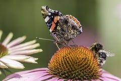 Polinización del insecto Fotografía de archivo libre de regalías