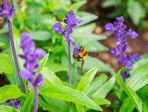 Polinización del insecto de la avispa encaramada en la flor superior Foto de archivo