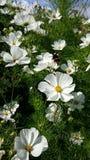 Polinización en primavera Foto de archivo libre de regalías