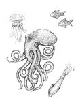 Polipo, medusa, calamaro, pesce royalty illustrazione gratis