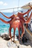 Polipo seccato al sole in Santorini fotografia stock