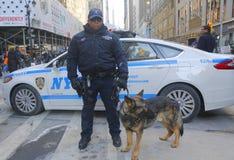 Polis för NYPD-transportbyrå K-9 och tysk herde som K-9 ger säkerhet på Broadway under vecka för Super Bowl XLVIII Royaltyfri Fotografi