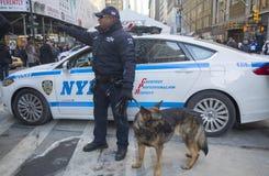 Polis för NYPD-transportbyrå K-9 och tysk herde som K-9 ger säkerhet på Broadway under vecka för Super Bowl XLVIII Arkivbilder