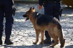 Polisen förföljer Royaltyfria Bilder