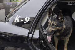 Polisen K-9 i bensindriven bil Royaltyfri Foto