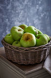 Polish Antonowka Apples in a Rustic Basket Stock Image