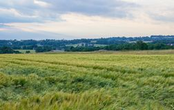 Polish arable fields. Rural landscape. Ripening cereals. A general view of the Polish arable fields. Unripe cereals stock images