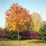 Polish autumn colors. Royalty Free Stock Images
