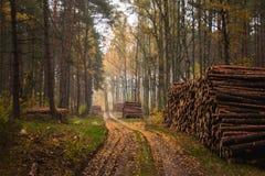 Polish autumn. Photo from great season in Poland Royalty Free Stock Photo