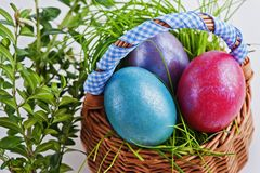 Colorful Easter eggs in a small Easter basket on a white backgro Stock Images