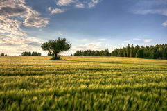 Polish countryside Royalty Free Stock Photography