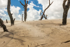 Polish dunes - Leba. Royalty Free Stock Photo