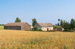 Polish farm and fields of wheat Royalty Free Stock Image