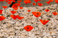 Polish fields, poppies Royalty Free Stock Image