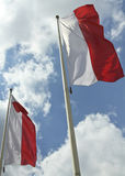 Polish flags Stock Photography