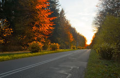 Polish golden autumn. On road by sunset. Goleden, because yellow leaves in sun become golden stock photo