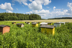 Polish landscape with beehives Royalty Free Stock Photo