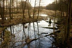 Polish marshland Royalty Free Stock Images