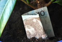 Polish money griwning in a sand Stock Photos