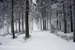 Polish mountains during winter stock photos