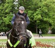 Polish Policeman on horseback Stock Images
