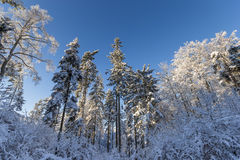 The Polish Pomerania winter Stock Images