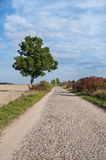 Polish road in autumn Royalty Free Stock Photography