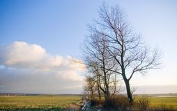 Polish rural landscape. Polish rural landsce, late autumn or early winter, barren trees and narrow country road Royalty Free Stock Photos