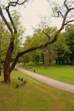 Polish spring landscape. Stock Images