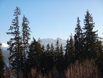 Polish Tatry mountains landscape in winter. Tatry mountains landscape in winter with snow and blue sky and forest. Giewont peek royalty free stock photography